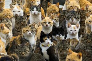 острів котів