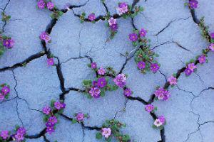 пустеля в квітах
