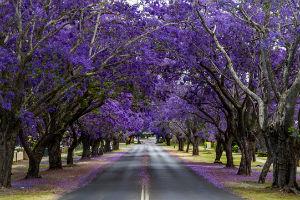 красива алея