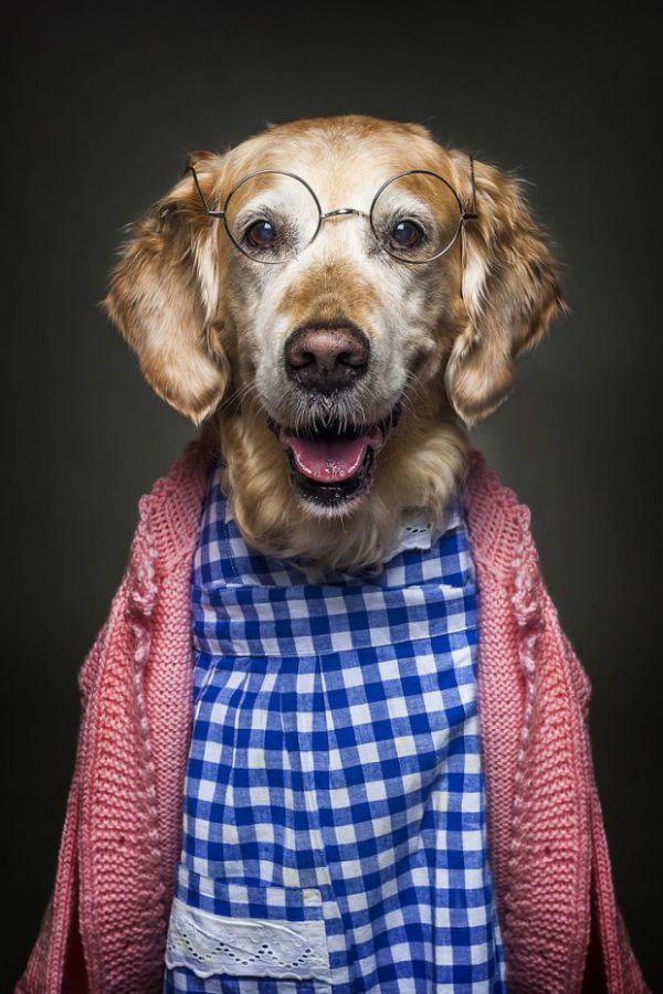 Неймовірні собаки у людському вбранні підкорили Інтернет (ФОТО)