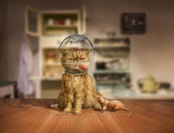 5398_cat-and-bowl-edit-eed1b95f0e7__880.jpg (27.52 Kb)
