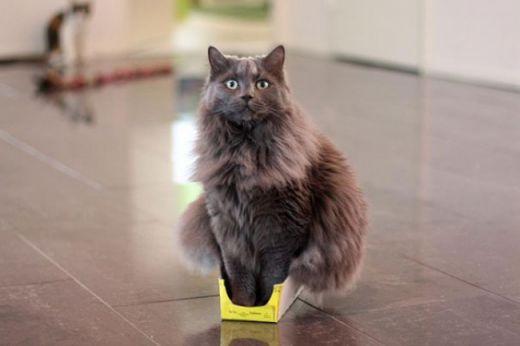 6569_7946810-r3l8t8d-650-funny-cats-if-it-fits-i-sits-14.jpg (18.81 Kb)