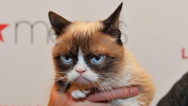 7393_skynews-grumpy-cat-cat_4671402.jpg (23.74 Kb)