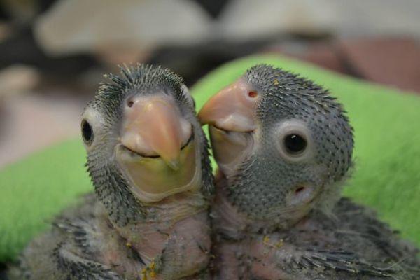 baby-animals-25__605.jpg (29.42 Kb)