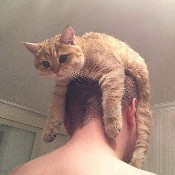 cat-hat1.jpg (.79 Kb)
