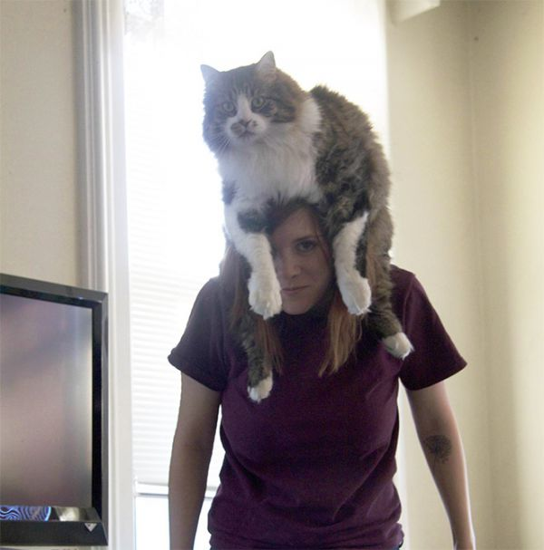 cat-hat13.jpg (36.39 Kb)