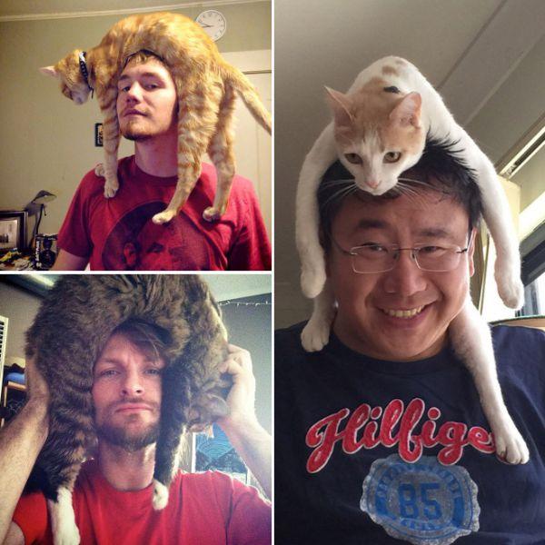 cat-hat4.jpg (60.93 Kb)