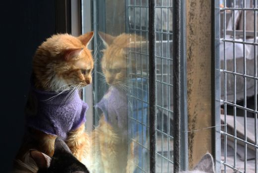 catshouse01.jpg (33.8 Kb)
