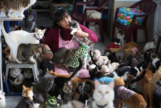 catshouse05.jpg (44.11 Kb)