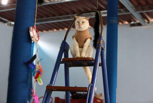 catshouse06.jpg (25.91 Kb)