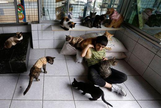catshouse09.jpg (40.54 Kb)