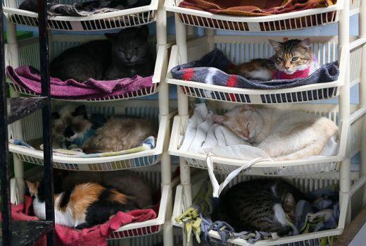 catshouse10.jpg (43. Kb)