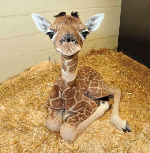 cutest-baby-animals-10__605.jpg (65.14 Kb)