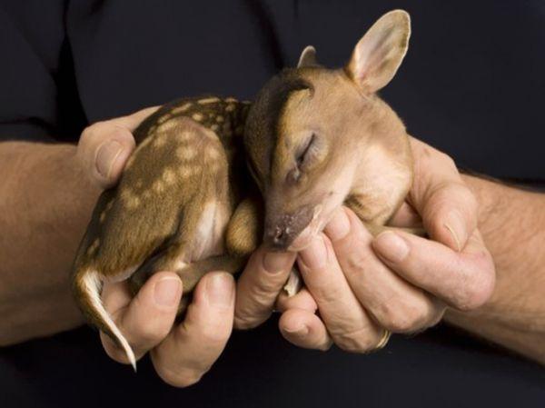 cutest-baby-animals-15__605.jpg (29.06 Kb)
