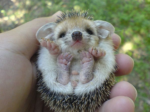 cutest-baby-animals-17__605.jpg (50. Kb)