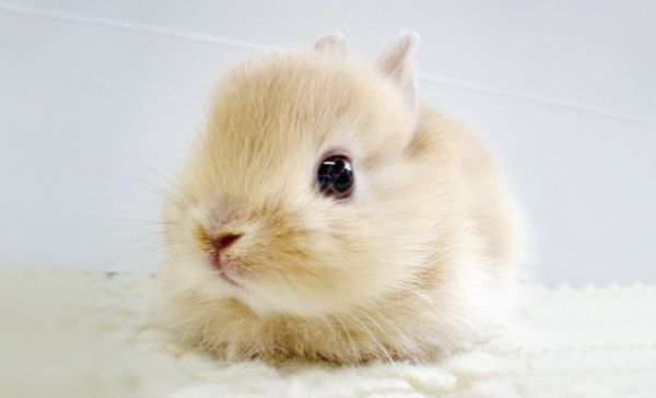 cutest-baby-animals-20__605.jpg (17.11 Kb)