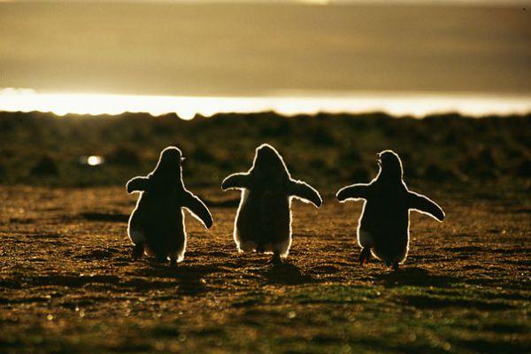 cutest-baby-animals-22__605.jpg (38.41 Kb)