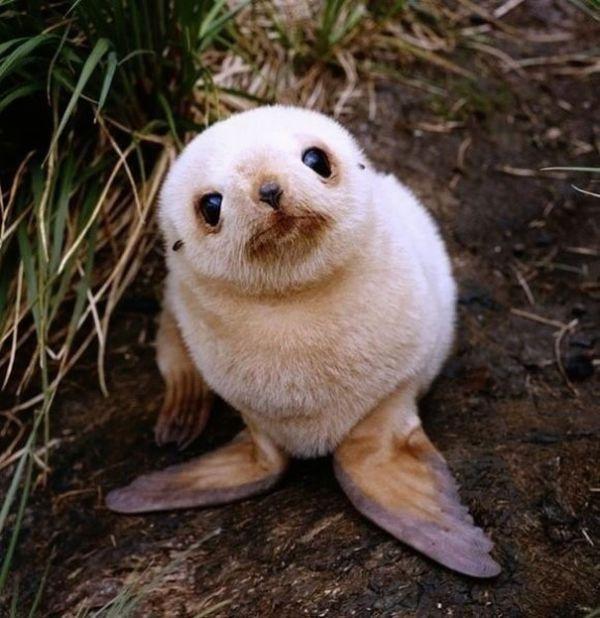 cutest-baby-animals-24__605.jpg (62.41 Kb)