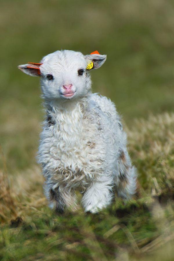 cutest-baby-animals-26__605.jpg (61.05 Kb)