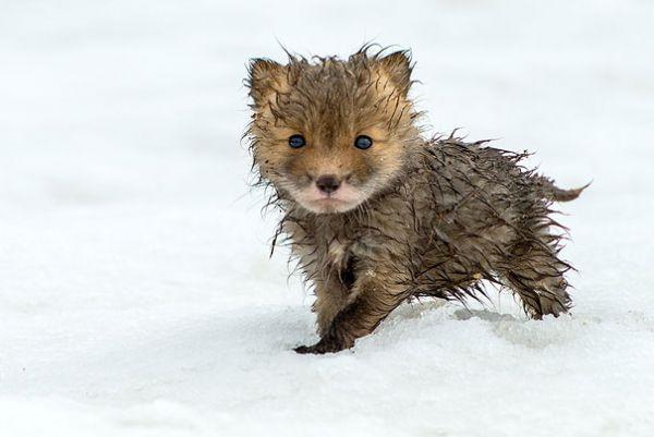cutest-baby-animals-27__605.jpg (29.71 Kb)