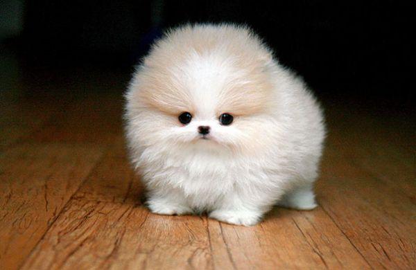 cutest-baby-animals-29__605.jpg (29.54 Kb)