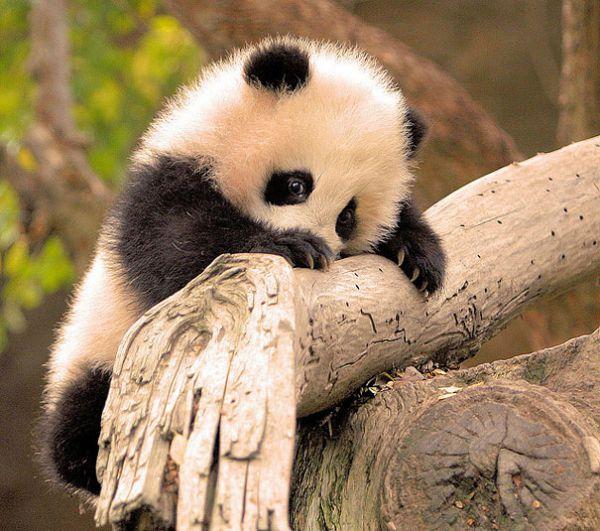 cutest-baby-animals-2__605.jpg (72.77 Kb)