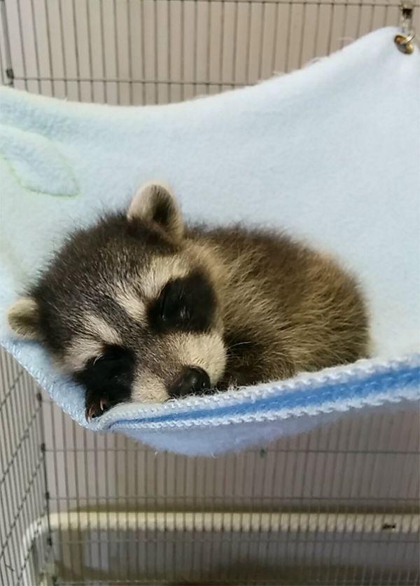 cutest-baby-animals-58__605.jpg (61.05 Kb)