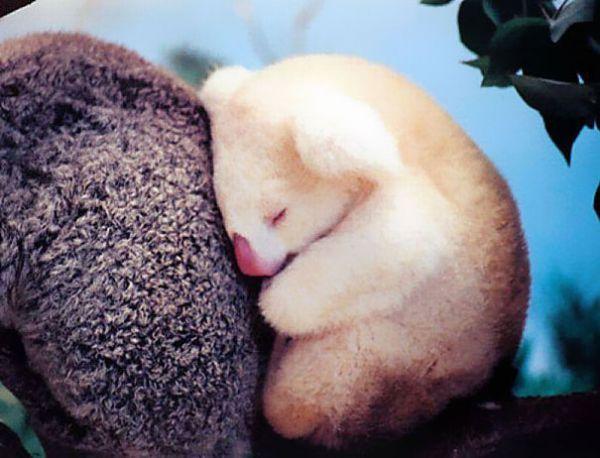 cutest-baby-animals-6__605.jpg (46.86 Kb)