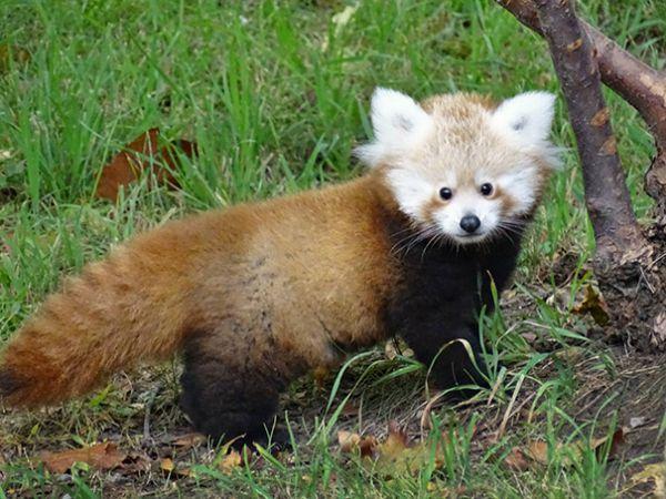 cutest-baby-animals-70__605.jpg (67.82 Kb)