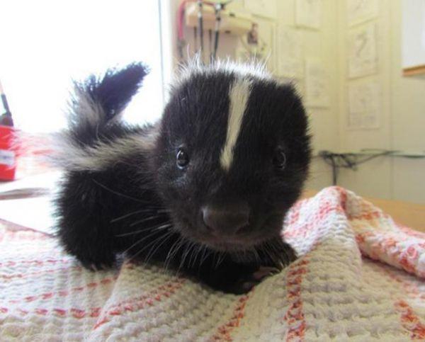 cutest-baby-animals-731__605.jpg (37.12 Kb)
