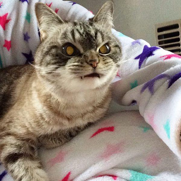 vampire-angry-cat-loki-33.jpg (70.95 Kb)