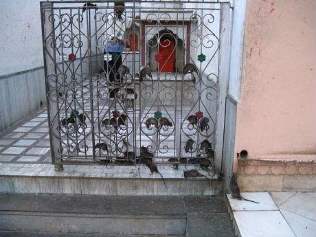 karni-mata-temple-1.jpg (45.1 Kb)